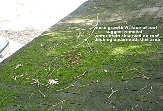 Mold Inspection photo, moss Growth and water stain on roof decking, Pineville, LA