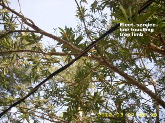 Home inspection photo, electric service line touching tree limb, Alexandria,LA